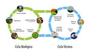 ciclo_según_C2C
