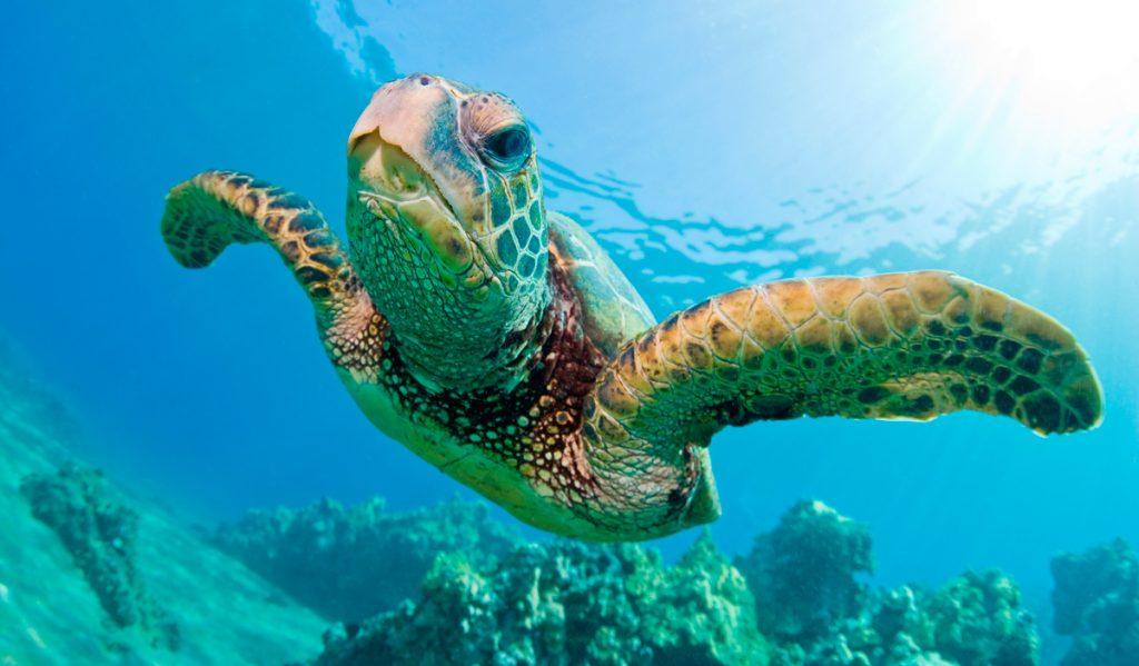 Día Mundial de las tortugas marinas 2017