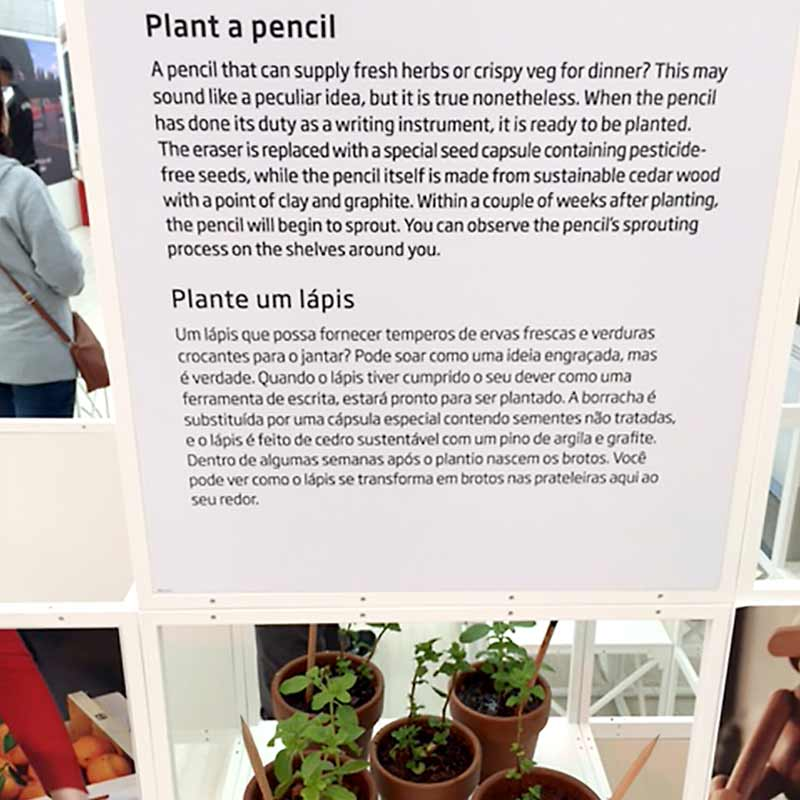 Lápices que se convierten en plantas
