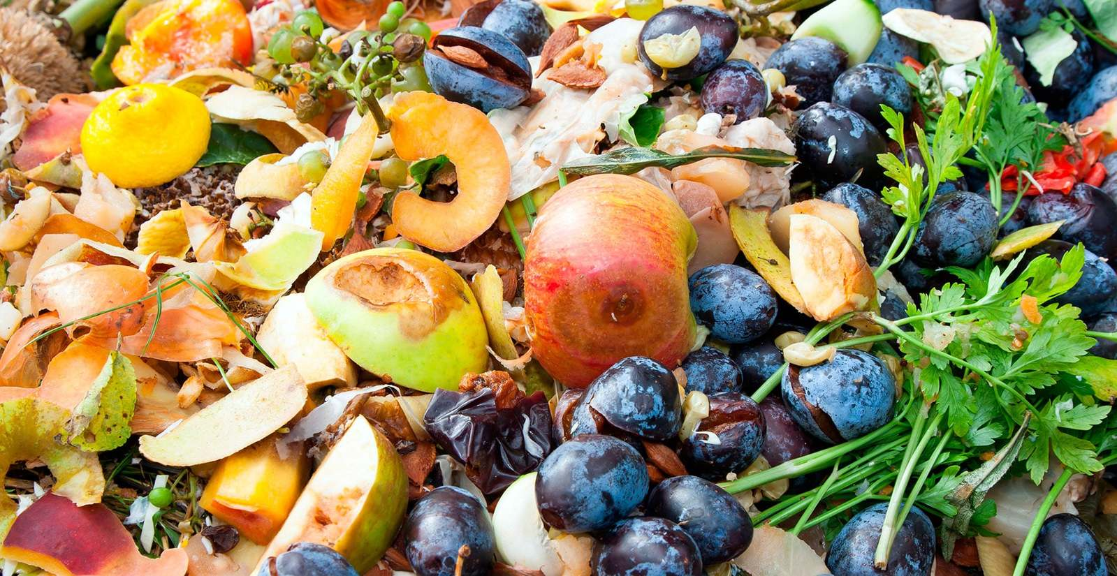 Concurso de recetas de cocina contra el desperdicio alimentario
